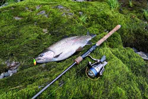 Best Spinning Rod for Trout | Fast Action or Ultralight?